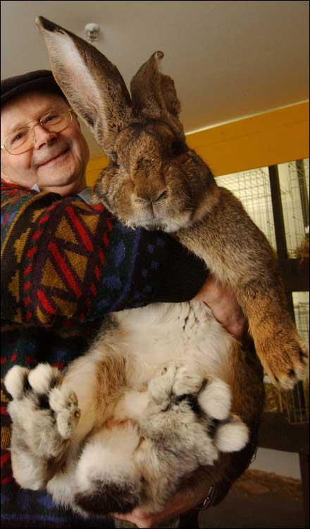 2-giant rabbit